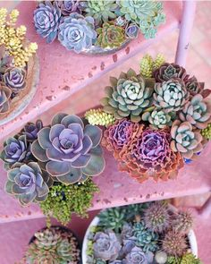 Your A-to-Z Guide to Creating a Stylish Succulent Collection #RueNow