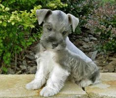 I need that puppy!   Sooooo Cute