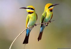 Beautiful Cool Birds HD (High Definition) Wallpapers