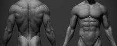 Male Anatomy Ref, adam skutt on ArtStation at https://www.artstation.com/artwork/4NB8L