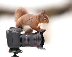 Bijzondere fotograaf (© Brunopress)