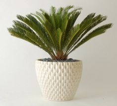 vessel ap-100 pineapple planter / planters - modern - outdoor planters - nestliving - CLOSED
