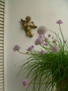 Chives on the balcony