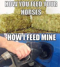 How you feed your horse...