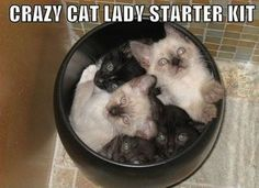 Here we go, sweetie. A Crazy Cat Lady Starter Kit!  :)