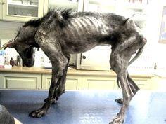 Este pobre cão devia morrer porque estava em muito mal estado, mas um milagre aconteceu!