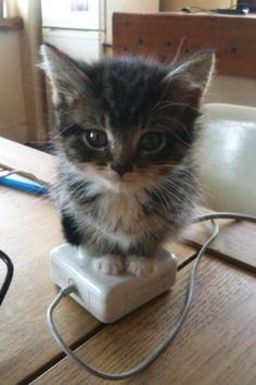 cat 7.1