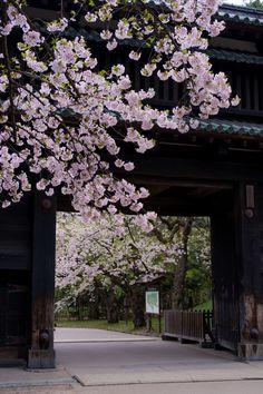 Japan 城門の彩り