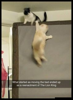 Funny Animal Pictures Of The Day 23 Pics - Funny Animal Quotes - - Funny Animal Pictures Of The Day 23 Pics The post Funny Animal Pictures Of The Day 23 Pics appeared first on Gag Dad. Cute Animal Memes, Funny Animal Quotes, Animal Jokes, Cute Funny Animals, Funny Animal Pictures, Funny Photos, Hilarious Pictures, Animal Pics, Pictures Images