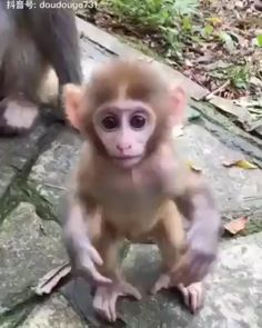 Animals Discover This mommy teaching her baby monkey not to play with strangers Cute Funny Animals Cute Baby Animals Animals And Pets Cute Cats Cute Animal Videos Funny Animal Pictures Cute Baby Monkey Dog Friendly Hotels Cute Fish Cute Little Animals, Cute Funny Animals, Cute Cats, Cute Animal Videos, Funny Animal Pictures, Cute Baby Monkey, Primates, Funny Babies, Dog Friends