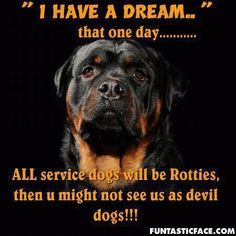 German Shepard's are worse than rotties #rottweiler