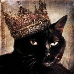 Black Cat photo  Cat wearing a Crown  Animal by TheLonelyPixel, $15.00