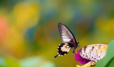 Macro Photography of Bugs with High Resolution Wallpaper 240814 | HD ...