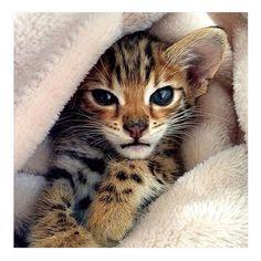 Cutie..
