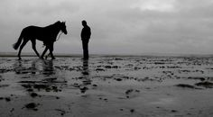 Stretching legs before action starts on the beach at Laytown (September Picture David Dew September 11, Stretching, David, Action, Legs, Beach, Pictures, Animals, Photos