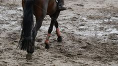 Foot of horse walking on mud. Close up of legs walking kicking up the wet muddy ground. Photos Foot of horse walking on mud. Close up of legs walking kicking up the wet muddy ground. by Footage Autor