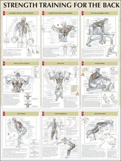 Here are some great exercises for the back.  When making a fitness program for weight lift you should try and incorporate at least 2 to 3 of these exercise.  Before you know it you may have all 9 of them in your program.  Keep training for a better you.