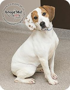 URGENT!  I am at a kill shelter in Troy, OH - Hound (Unknown Type) Mix. Meet Rue a Dog for Adoption.