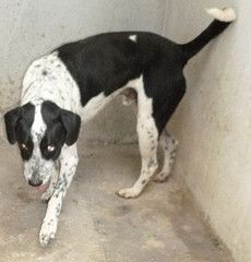 GERALDO Dogs, Animals, Pet Adoption, Animales, Animaux, Doggies, Animal, Animais, Dieren