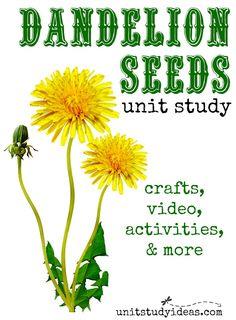 Dandelion Seeds Unit Study @ UnitStudyIdeas.com