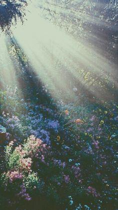 Un Hermoso Jardin Iluminado Con La Luz Del Sol...