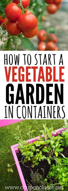 Container Gardening is easier than you might think - How to start a Vegetable Garden in containers!