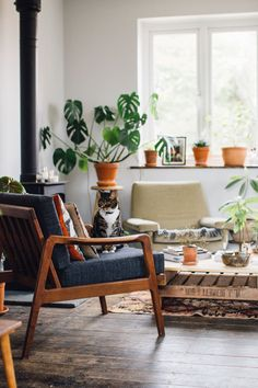 Cats and plants - A plant filled living space