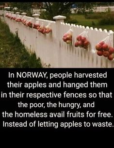 Surplus Apples Hung for Free From Fences in Norway to Feed the Hungry? Are Surplus Apples Hung for Free From Fences in Norway to Feed the Hungry?Are Surplus Apples Hung for Free From Fences in Norway to Feed the Hungry? Change The World, In This World, Beau Message, Save Our Earth, Wtf Fun Facts, Random Facts, Funny Facts, Random Stuff, Human Kindness
