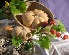 6번째 이미지 Vegetable Painting, Fruits Basket, Painting Still Life, Ribbon Work, Still Life Photography, Watercolor Art, Flora, Pumpkin, Vegetables