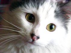 """""""Renato"""" el gato."""