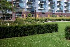 mooi groen. wel soort plant en groen gebuiken in de wijk?