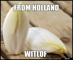 From Holland Witlof...L.Loe