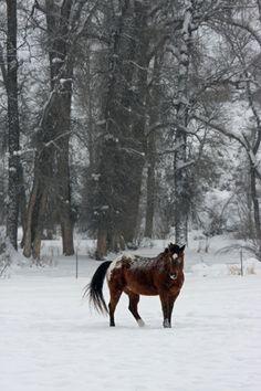 ATM Equine Snow Scene