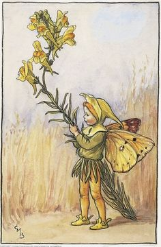 Illustration for the Toadflax Fairy from Flower Fairies of the Summer. A small boy fairy stands facing right holding a stem of toadflax.  										   																										Author / Illustrator  								Cicely Mary Barker