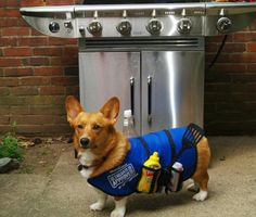 The best grill assistant ever.
