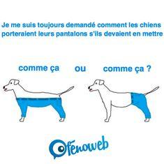 Comment les chiens porteraient leurs jeans à votre avis ? | fénoweb