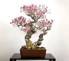 Bonsai♦️More Pins Like This At FOSTERGINGER @ Pinterest ♦️