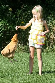 A chicken jumping for Happy Hen treats!~Yes, but can she rollover or beg? ;)~
