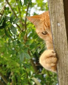 Ginger cat. #cats