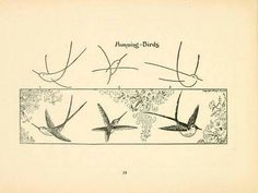 How to draw humming birds