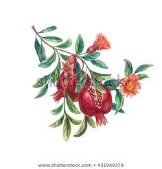 Pomegranate Drawing, Pomegranate Tattoo, Pomegranate Art, Botanical Drawings, Botanical Illustration, Illustration Art, Leaf Drawing, Painting & Drawing, Illustration Botanique