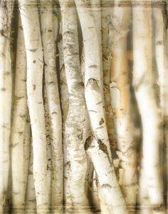 WALLPAPER TREE BARK TRUNK WOOD PANELS STUMP STEM NATURE OUTDOOR 10M ROLL