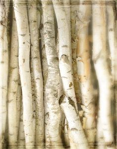Close To Me - Photograph - Nature Photography - Birch Bark Tree - Winter White - Forest Neutral Decor- 8x10 Photo - Hostess Gift. $20.00, via Etsy.