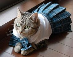 Because we all know how much kitties love to wear plaid...