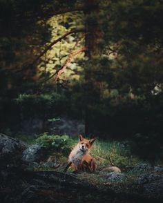 "megarah-moon: ""By kpunkka "" Leopards, Lions, Giraffe, Wolf, Cute Animals, Punk, Puppies, Instagram, Foxes"