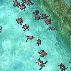 Hotels-live.com/pages/comparateur-hotels.html - Baby Turtles Maldives photo by @liviajando by awesomedreamplaces https://instagram.com/p/-QvddUlNt-/