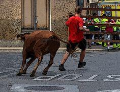 Santacara: Vacas Hermanos Ganuza de Artajona - (2) 26 de Octu... Moose Art, Animals, Cows, Siblings, October, Fiestas, Animales, Animaux, Animal