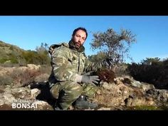How To Collect Material For Bonsai: The Olive Tree (Olea sylvestris) - YouTube