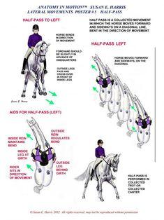 Resultado de imagen para circle of aids riding Horse Riding Tips, Horse Tips, Trail Riding, Centered Riding, Horse Exercises, Riding Lessons, Dressage Horses, Horse Training, Training Tips