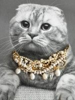 Check Me-owt! 12 Cats Model Fall Jewelry #refinery29  http://www.refinery29.com/cat-jewelry